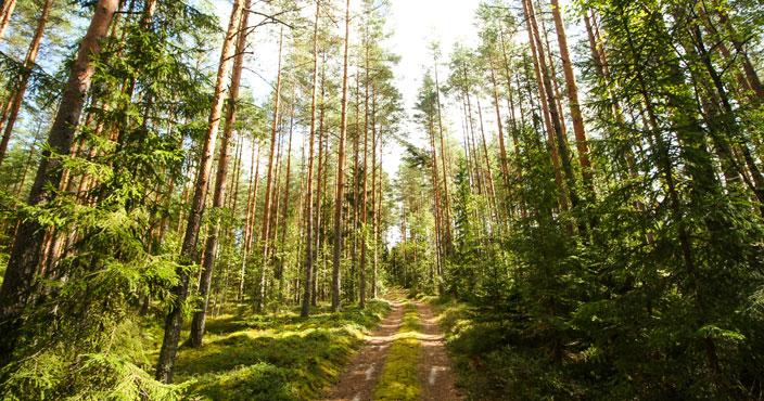 Stiga RN Forest